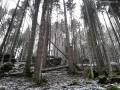 Sziklatorony - Kurmatura-patak - Királykő-hegység