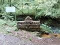 Buzgó borvíz - Fenyves-patak völgye