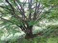 A bükkfa szíve - Uzonkafürdő