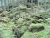 Veres-kő Gyergyótölgyes