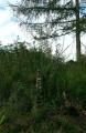 Kopjafás temető - Erdőfüle
